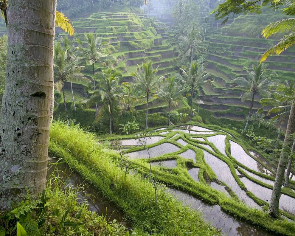 Rice-terrace-located-near-a-temple