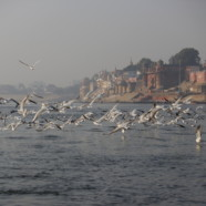 Banaras: Bold, Beautiful and Bejeweled!